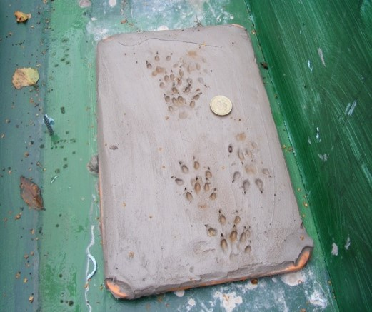 mink prints in clay