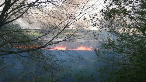reedbed fire